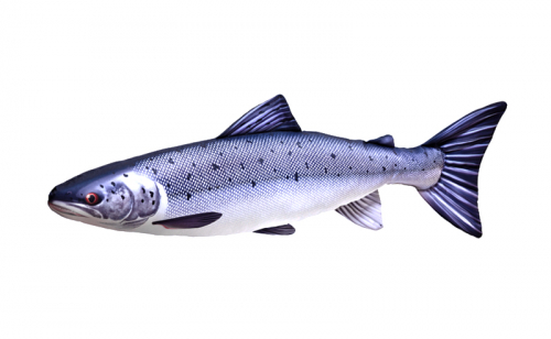 Възглавничка Salmon